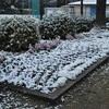また、雪です。