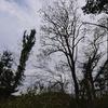 お墓や梨畑際の伐採 6,7日目 また木登り