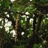 Nikonのデジイチ「D3000」で2017年5月23日までに撮影した写真です。「タチアオイ」や「ブラシノキ」を撮りました