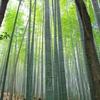 あの竹林風景は、嵯峨野なの? 嵐山なの?
