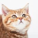 子猫の断捨離ブログ