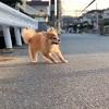 【犬も反抗期】〜イヤイヤ期到来〜