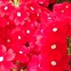 自宅周辺の花を撮ってきました