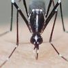 虫刺され、蚊に刺されないために私が気をつけたこと