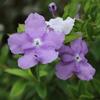 夏の日の紫の花をすこし