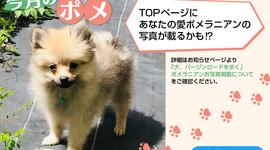 「犬、バージンロードを歩く」ポメラニアンお写真掲載について