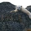 習近平主席が公約した地球温暖化対策- 真の狙いは