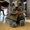 【猫】はなちゃんの1歳誕生日!!!!