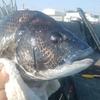清水 三保 紀州釣り フグがおおいとこ どうすれば?