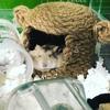 ハムちゃんも喜ぶ天然素材『ハムちゅぐら』普段見れない可愛い姿も見れちゃいます!