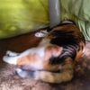 【愛猫日記】毎日アンヌさん#156