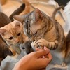 野良猫への餌やりは良いのか悪いのか!法律や条例ってあるの?