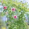 庭の魅力〜私のお庭遍歴