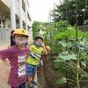 やまびこ:朝は畑で 育つ野菜