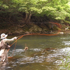 やってみたい釣り・釣りたい魚