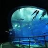 水族館の人気コンテンツ勢ぞろい!日本一のサメ水族館【アクアワールド茨城県大洗水族館】