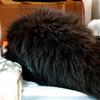 足腰の弱った猫用トイレを模索している