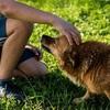 【これだけは覚えてほしい】犬が体を触られると喜ぶ場所や嫌がる場所は?