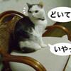 哲学するネコ