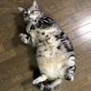 猫を飼っている家庭の旦那さんは猫にジェラシーを感じている。では、猫を味方につける方法とは?