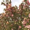 春のおさんぽ・お花見
