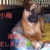 保護子犬7匹の飼い主さんを募集します