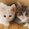 犬と猫どちらの方が飼いやすいの?