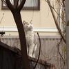 4月2日 南品川から池上まで猫さま歩き とその情景