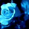青いバラ=「夢かなう」「不可能」「奇跡」「神の祝福」