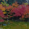 紅葉・池・青鷺