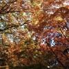 自然が紅葉する季節に行くキャンプはまた別格に美しい