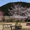 【桜】がきれいな週末です ~満開まではもう少し