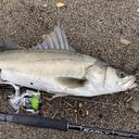 中越ヘボ釣り師の釣り記録と成長記