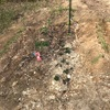 久しぶりの水やりと肥料について