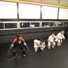 火曜日キッズクラス、一般柔術クラス。