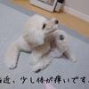 ~愛犬が体をかく原因について~