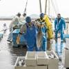 2017年3月13日 小浜漁港 お魚情報