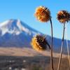 2018年1月2日 高座山~杓子山~鹿留山(日帰り)