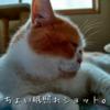 雨田甘夏、膀胱です。【猫とおしっこと我慢事情】