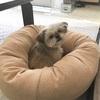 オーガニックコットン犬用ベッド買いました