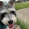 犬のお散歩と虫除け