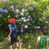 【季節を感じる家庭学習】紫陽花と雨【梅雨の工作】