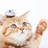 猫に糞をさせない!野良猫がこない基本ポイント3つとは!