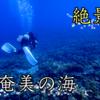「冬の奄美大島で乗り物酔い激しい私が初めてのダイビング」に挑戦してきた!