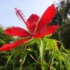 真夏の花・・