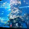 シンガポール旅行記セントーサ島へ。世界最大級の水族館。青いロブスターもw