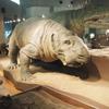 ブラタモリ[総合]2018年12月8日(土) 午後7:30~午後8:15(45分)で東尋坊・恐竜博物館を放映されました。