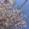 「外出自粛」のこの春を記す