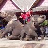 #104 バンコク旅行を振り返ってみた。~ローズガーデン編~ (2004.2)