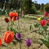 群馬県にある春の敷島公園散策。